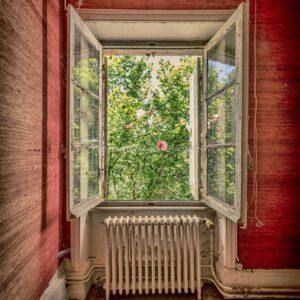 Sicht aus Fenster auf einen Rosenstock aus einem verlassenen Schlosses in Frankreich. Vue à travers la fenêtre d'un rosier d'un château abandonné en France.